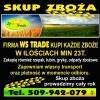 Ogłoszenia naszraciborz.pl: Skup zbóż, min 20t, płacimy w dniu odbioru
