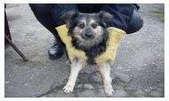 Psy biegają samopas i straszą dzieci - Serwis informacyjny z Wodzisławia Śląskiego - naszwodzislaw.com