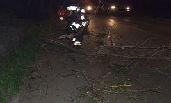 Drzewo przewróciło się na drogę - Serwis informacyjny z Wodzisławia Śląskiego - naszwodzislaw.com