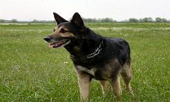 Informacja dla posiadaczy psów - Serwis informacyjny z Wodzisławia Śląskiego - naszwodzislaw.com
