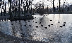 Jak możemy pomóc ptakom w zimie - Serwis informacyjny z Wodzisławia Śląskiego - naszwodzislaw.com