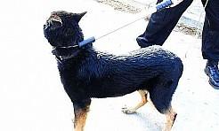 Pies uwięził rodzinę w domu - Serwis informacyjny z Wodzisławia Śląskiego - naszwodzislaw.com
