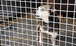 Zajmą się sprawą bezdomności zwierząt - Serwis informacyjny z Wodzisławia Śląskiego - naszwodzislaw.com