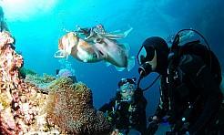 Otwórz przed dzieckiem nowe horyzonty – zapisz rodzinę na naukę nurkowania! - Serwis informacyjny z Wodzisławia Śląskiego - naszwodzislaw.com