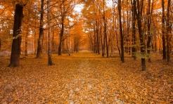 Sprawdź projekt Uproszczonego Planu Urządzenia Lasu dla Gminy Mszana - Serwis informacyjny z Wodzisławia Śląskiego - naszwodzislaw.com