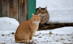 Pomagamy zwierzętom przetrwać zimę - Serwis informacyjny z Wodzisławia Śląskiego - naszwodzislaw.com