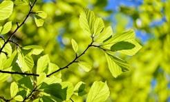 Posadzą 20 drzew na 20-lecie powiatu  - Serwis informacyjny z Wodzisławia Śląskiego - naszwodzislaw.com