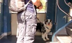 Pies, który jeździł koleją. 1 lipca gratis  - Serwis informacyjny z Wodzisławia Śląskiego - naszwodzislaw.com