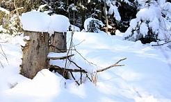 GCK w Gorzycach zaprasza do udziału w zimowisku w Zakopanem - Serwis informacyjny z Wodzisławia Śląskiego - naszwodzislaw.com