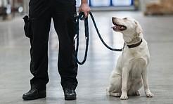 Są niezawodne i wyjątkowe. O psach w śląskiej służbie celno-skarbowej  - Serwis informacyjny z Wodzisławia Śląskiego - naszwodzislaw.com