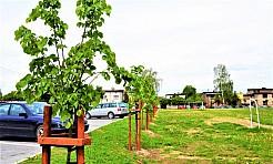 W Radlinie posadzono ponad dwadzieścia nowych drzew - Serwis informacyjny z Wodzisławia Śląskiego - naszwodzislaw.com