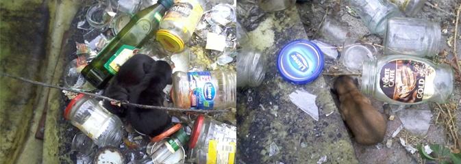 Psy wyrzucone do... kosza ze szkłem! Uratowali je strażnicy miejscy - Serwis informacyjny z Wodzisławia Śląskiego - naszwodzislaw.com