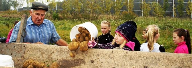Dzieci z Połomi uczestniczyły w tradycyjnych wykopkach - Serwis informacyjny z Wodzisławia Śląskiego - naszwodzislaw.com