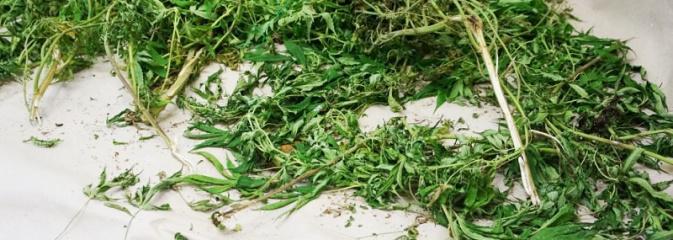 Marihuanę ukrył w worku na śmieci - Serwis informacyjny z Wodzisławia Śląskiego - naszwodzislaw.com