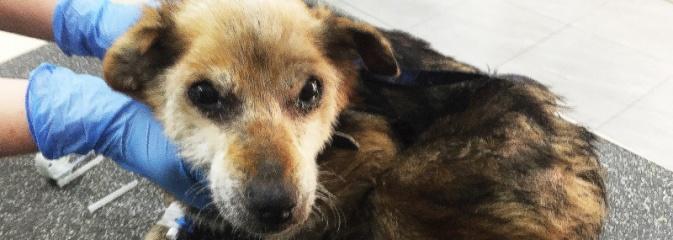 Dzięki interwencji jednego z mieszkańców bezpański pies otrzymał pomoc - Serwis informacyjny z Wodzisławia Śląskiego - naszwodzislaw.com