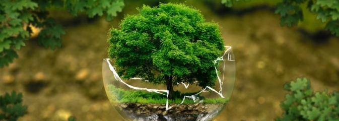 Dzieci piszą Listy dla Ziemi i proszą dorosłych, by byli po stronie natury  - Serwis informacyjny z Wodzisławia Śląskiego - naszwodzislaw.com