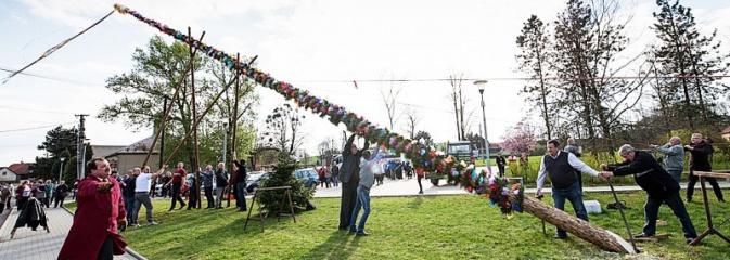 Ustawili 22-metrową palmę wielkanocną na festiwalu w partnerskiej gminie Frycovice - Serwis informacyjny z Wodzisławia Śląskiego - naszwodzislaw.com