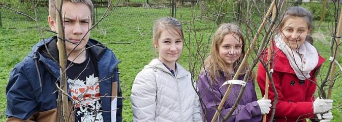 760 drzew na 760-lecie Wodzisławia Śląskiego. Nowe nasadzenia na terenie miasta - Serwis informacyjny z Wodzisławia Śląskiego - naszwodzislaw.com
