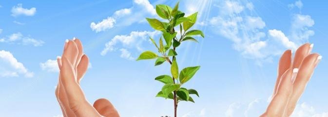 Otwarty konkurs ofert na wsparcie zadań publicznych miasta Radlin w dziedzinie ekologii i ochrony zwierząt - Serwis informacyjny z Wodzisławia Śląskiego - naszwodzislaw.com