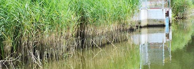 Doszło do uszkodzenia śluzy wodnej w zbiorniku na Balatonie. Poziom wody znacznie się obniżył! - Serwis informacyjny z Wodzisławia Śląskiego - naszwodzislaw.com