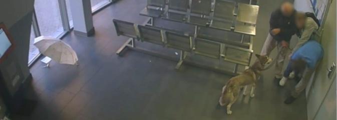 Bójka w poczekalni autobusowej. Szarpaninę zarejestrowała kamera  - Serwis informacyjny z Wodzisławia Śląskiego - naszwodzislaw.com