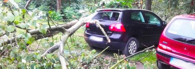 Kolejna nawałnica dała się we znaki. Dwie osoby przygniecione przez drzewo w Olzie! - Serwis informacyjny z Wodzisławia Śląskiego - naszwodzislaw.com