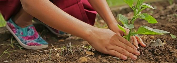 Radlin: Budki lęgowe i ogródki sensoryczne. Młodzi będą promować styl eko - Serwis informacyjny z Wodzisławia Śląskiego - naszwodzislaw.com
