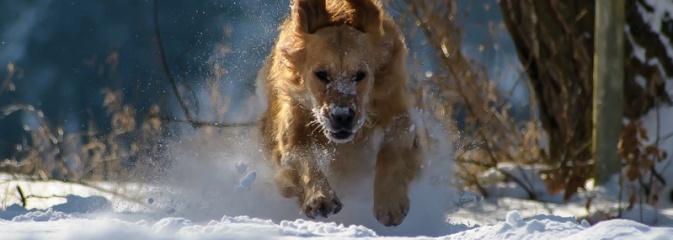 Właściwego traktowania w czasie silnych mrozów wymagają również zwierzęta - Serwis informacyjny z Wodzisławia Śląskiego - naszwodzislaw.com