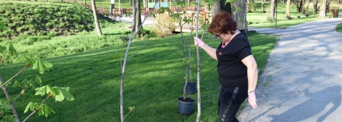 W Mszanie sadzą 100 drzew na 100-lecie niepodległości Polski - Serwis informacyjny z Wodzisławia Śląskiego - naszwodzislaw.com