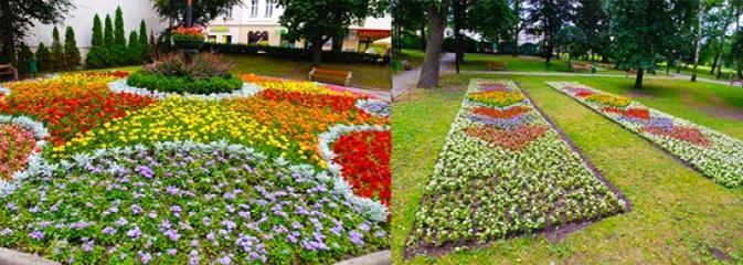Pomysł, różnorodność i piękne kolory! Zobaczcie kwietne dywany w Parku Miejskim  - Serwis informacyjny z Wodzisławia Śląskiego - naszwodzislaw.com