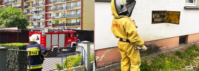 Interwencji związanych z owadami ciąg dalszy. Strażacy mają pełne ręce roboty - Serwis informacyjny z Wodzisławia Śląskiego - naszwodzislaw.com