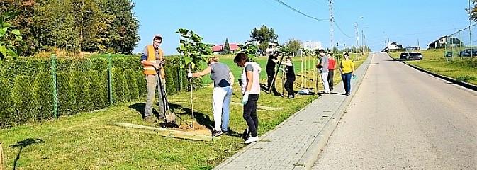Wzdłuż Sportowej w Mszanie posadzili nowe drzewa - Serwis informacyjny z Wodzisławia Śląskiego - naszwodzislaw.com