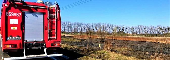 Pożar trawy obok autostrady A1 w Turzy Śląskiej - Serwis informacyjny z Wodzisławia Śląskiego - naszwodzislaw.com