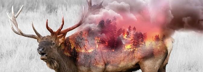 Wypalanie traw szkodzi, a nawet zabija! - Serwis informacyjny z Wodzisławia Śląskiego - naszwodzislaw.com