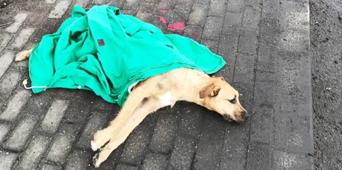 Pies wykrwawiał się na ulicy