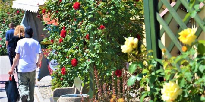 Kwitnące centrum Radlina